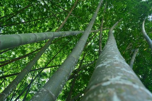 Peradeniya trees - Visit Perediniya Botanical Gardens with Sri Lanka Trusted Tours