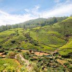 Sri Lanka Tours and Private Driver - Visit Nuwara Eliya view through the plantations
