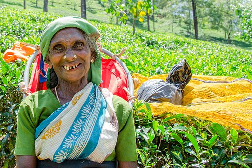 Sri Lanka Tours and Private Driver - Visit Tea Plucker in Nuwara Eliya
